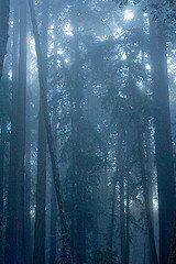mt_madonna_fog