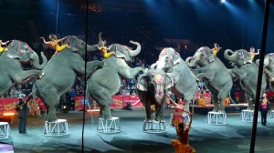 six elephants